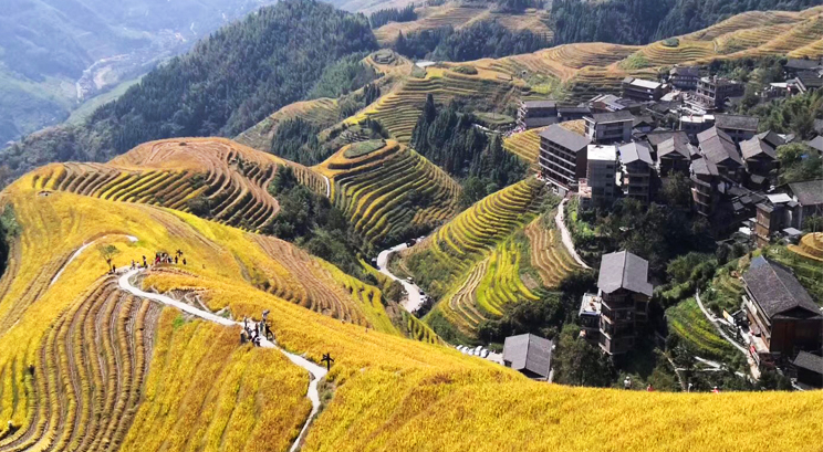 Longji Rice Terrace