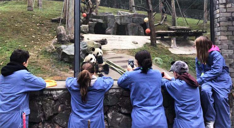 Panda Volunteering Work